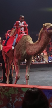 camel and boy